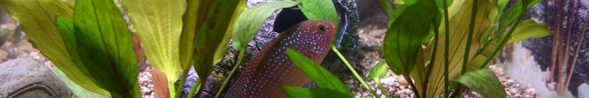 aquarium-fish-242413_960_720