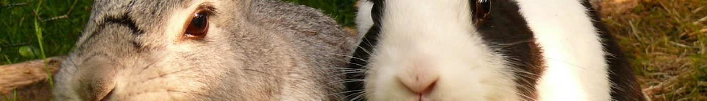 hare-595136_960_720